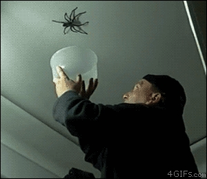 Łapanie pająka