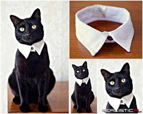 Kot może być elegancki