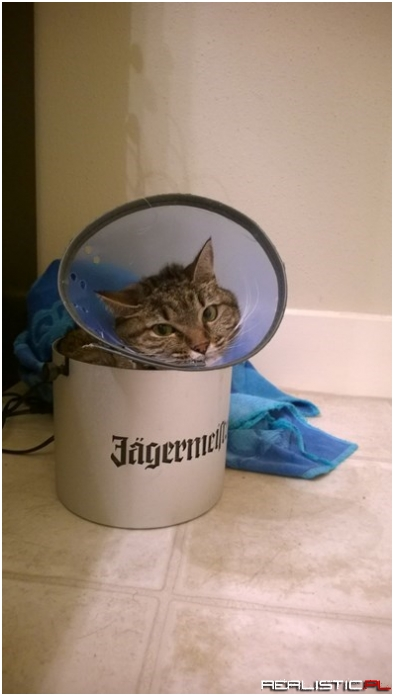 I Can't Fits in My Bucket