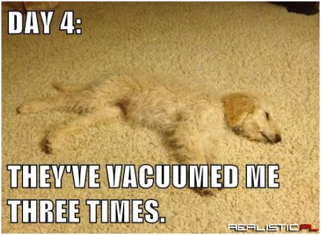I No Longer Fear The Vacuum Beast