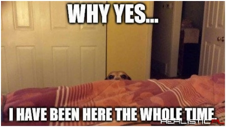 Creeper Dog is Creepin