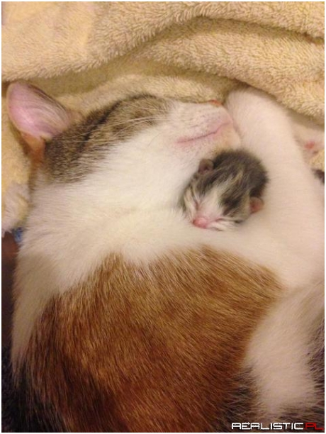 Mama cat loving her first newborn before the others arrived