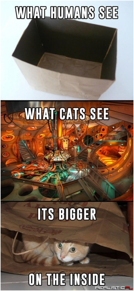 Cats Have Time Lord Technology