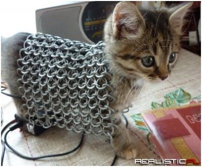 Wojowniczy kot