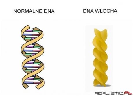 Włoskie DNA