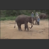 Elephantinho